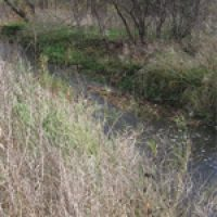 Riparian and Wet Meadow Seed Mixes
