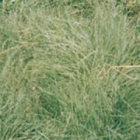Lawn Seed Mixtures