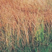 Specific Use Grass Mixes