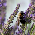 Pollinator gardening tips from OSC Seeds