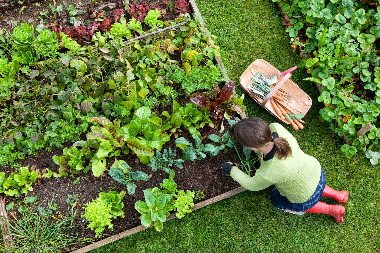 Image of: How To Plan Your Vegetable Garden Osc Seeds