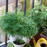 Container gardening tips from OSC Seeds