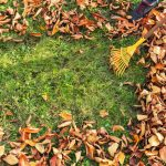 How to take care of your lawn this fall from OSC Seeds
